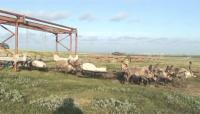 Link to: ЭАЛАТ – Люди и олени в меняющемся климате